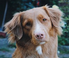 tassarnas shampoo hund
